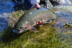 dry fly fishing for trout