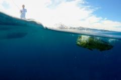 dorado underwater